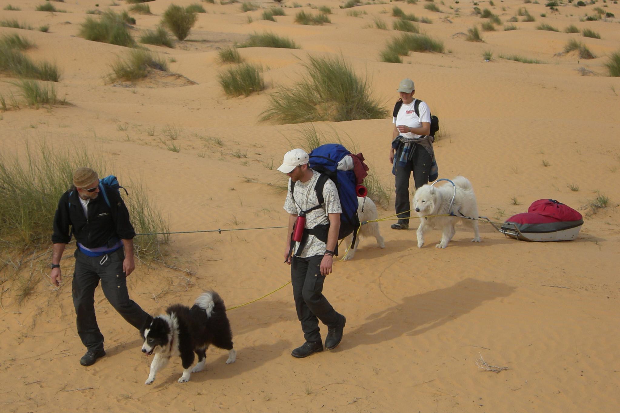 Hundeschlitten Wüste