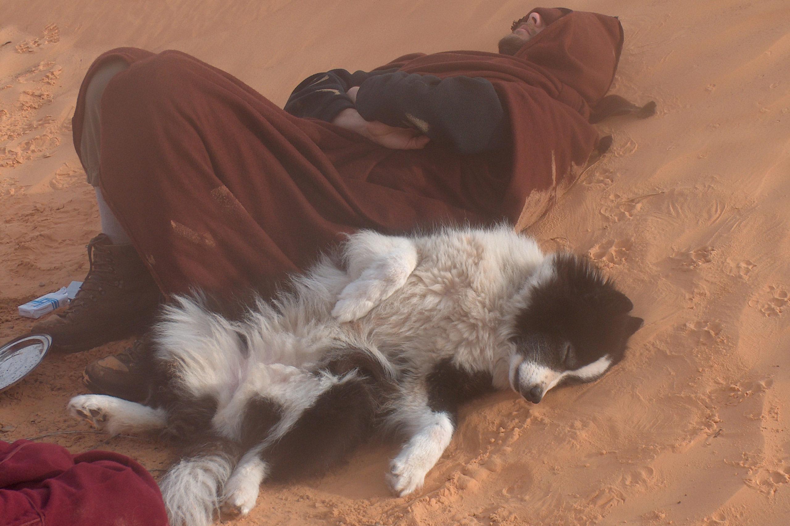 Hundeschlitten Schlafen