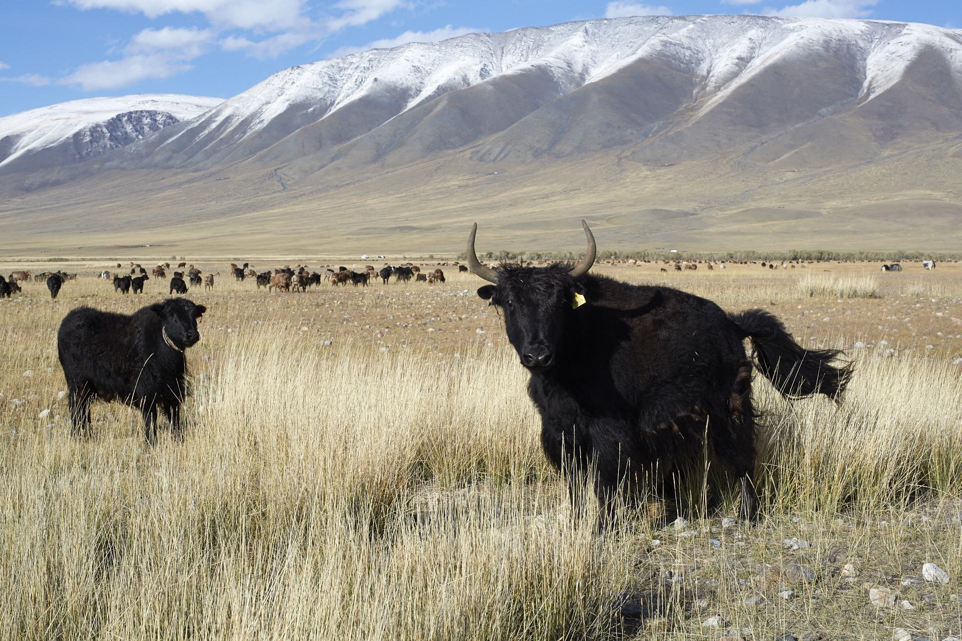 4x4 Abenteuerreise: Ein Tag in der Mongolei 3