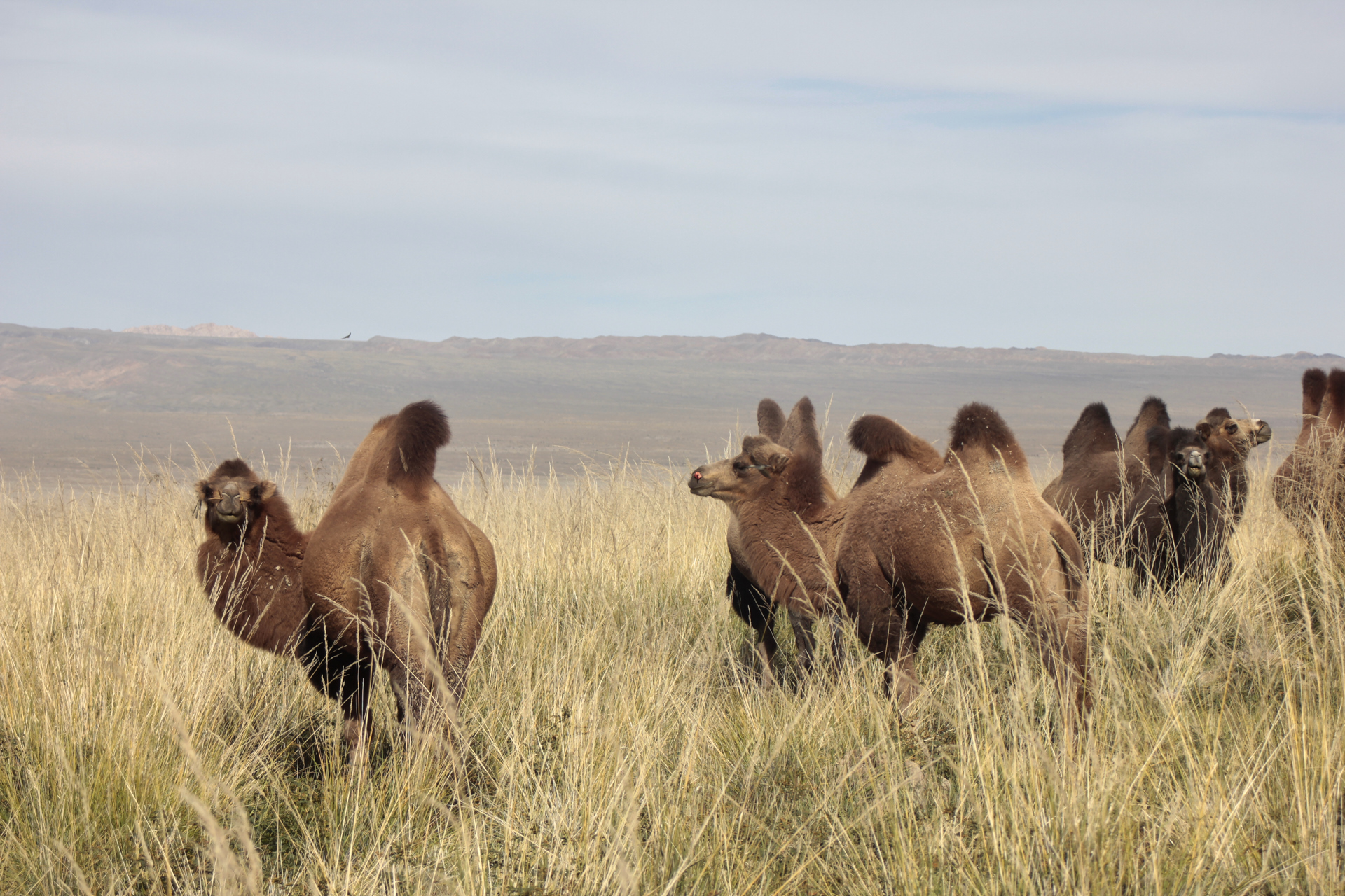 4x4 Abenteuerreise: Ein Tag in der Mongolei 4