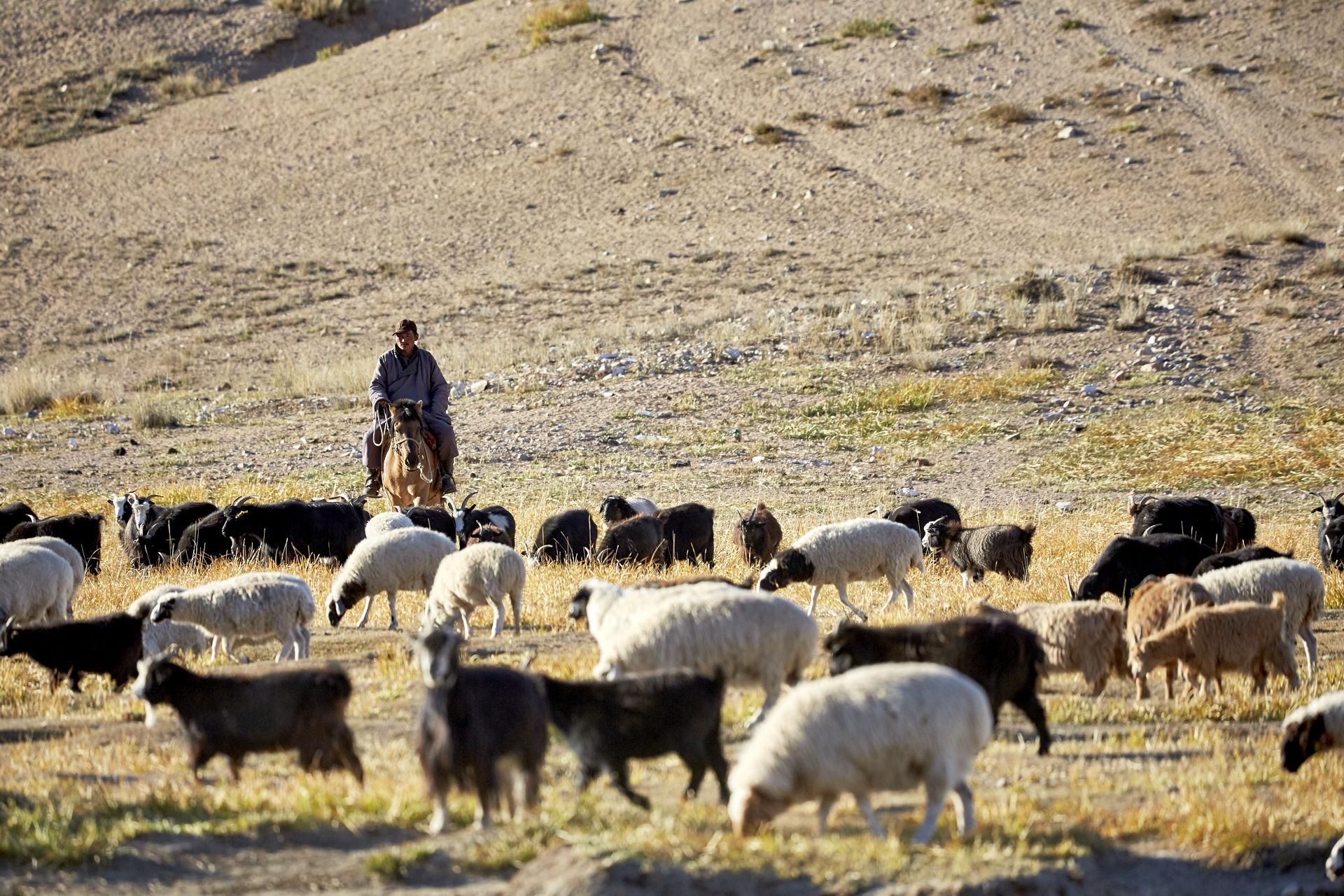 4x4 Abenteuerreise: Ein Tag in der Mongolei 5