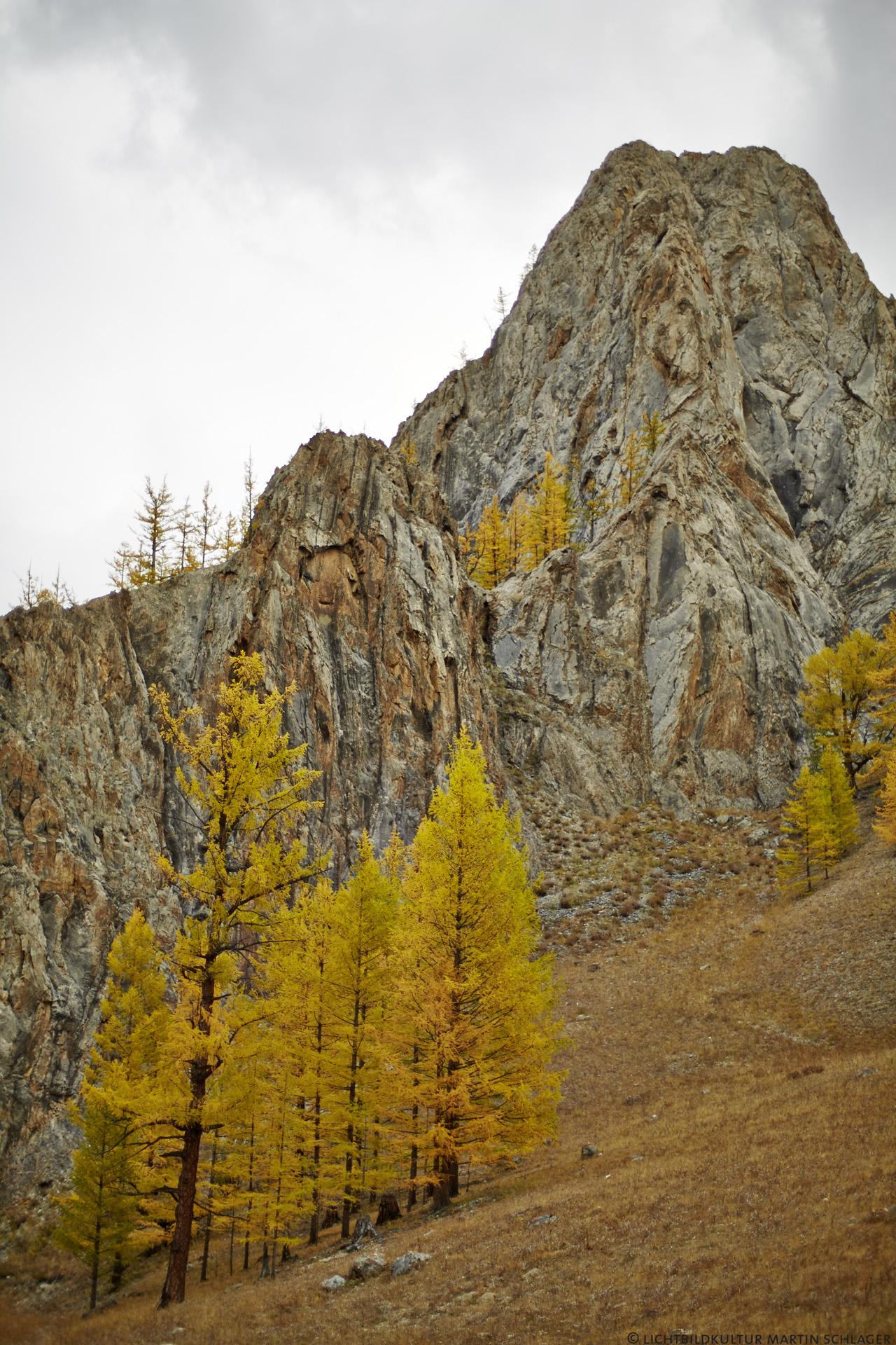 Mongolei Lärchenwald