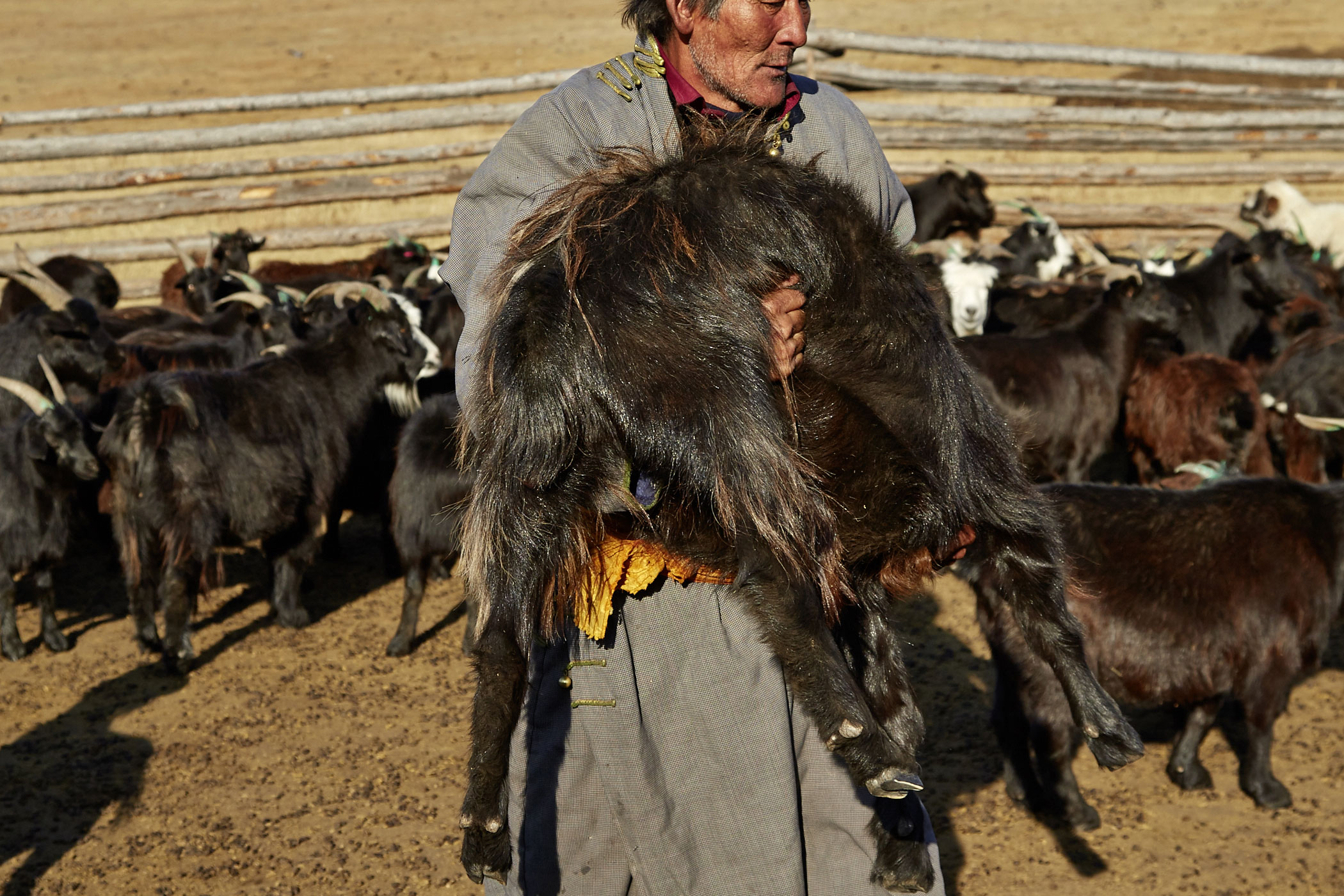 Mongolei Ziege